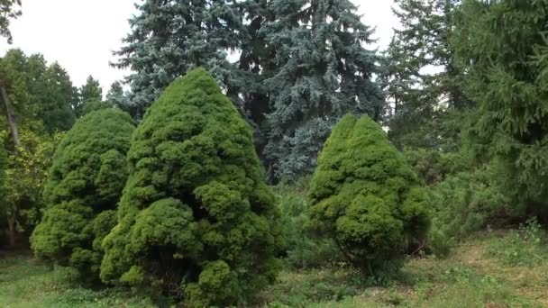 Different Types Plants Trees Pine Family Growing Botanical Garden