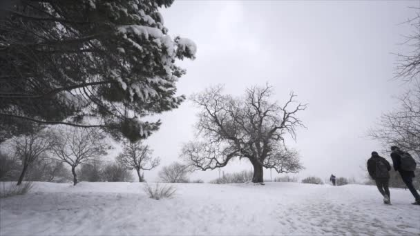 Falling snow in a winter park with snow covered trees people walking  - Slow Motion