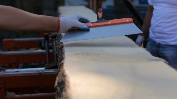Carpenter throw away sawdust from board after cutting in sawmill. Close-up of sawdust and plank