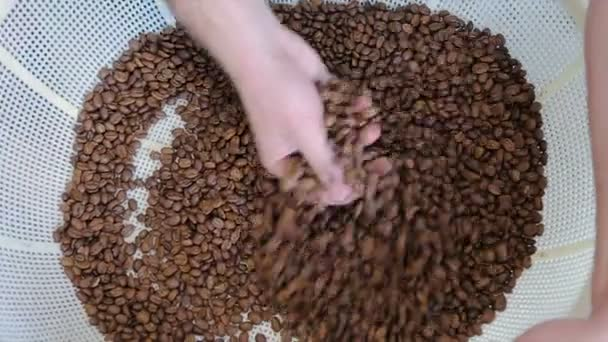 Coffee house munkavállaló ellenőrzése pörkölt kávébabot feldolgozó gyár