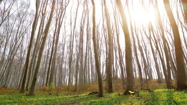 Zelené jarní les. Ranní slunce svítí zelené trávy s bílými květy. Panorama 1920 × 1080