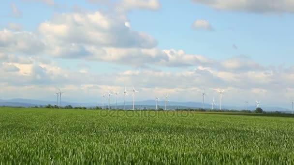 Polsko větrné energie. Krajina s větrnými mlýny a kvetoucí pšeničné pole