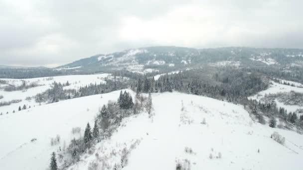 Letecký létat nad stromy v horách zamračený den