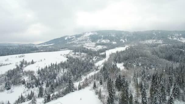 Antennenflug über die Bäume in den Bergen bewölkter Tag