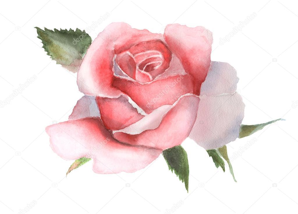 Aquarelle Rose Rose Sur Le Dessin A La Main Blanche Photographie