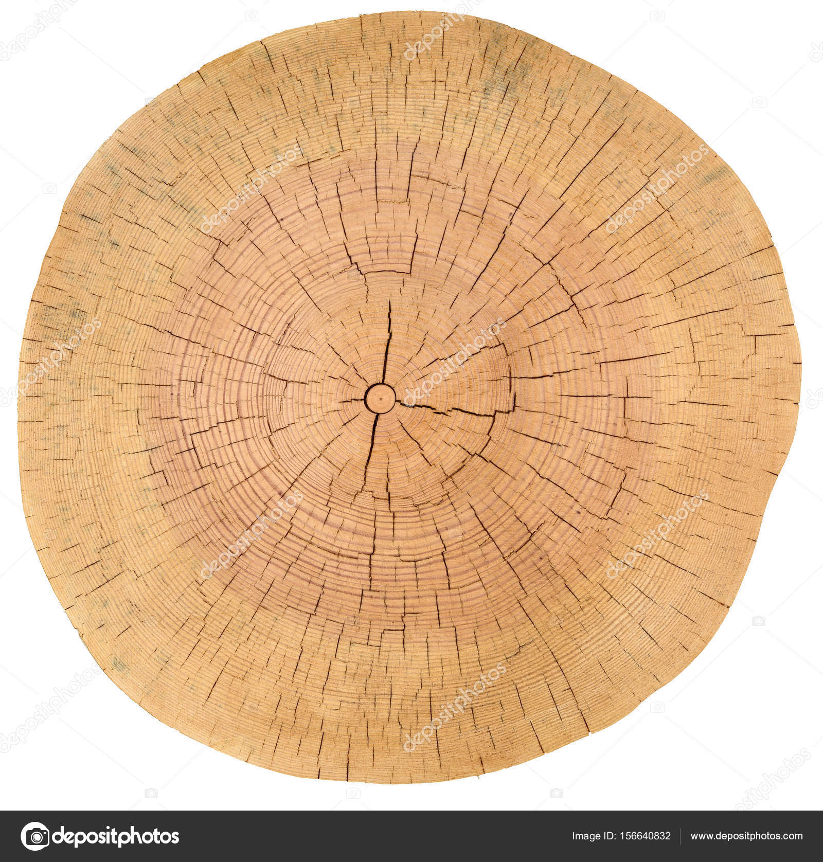 circle tree cracked slice rings texture wood lumber photo stock image background of