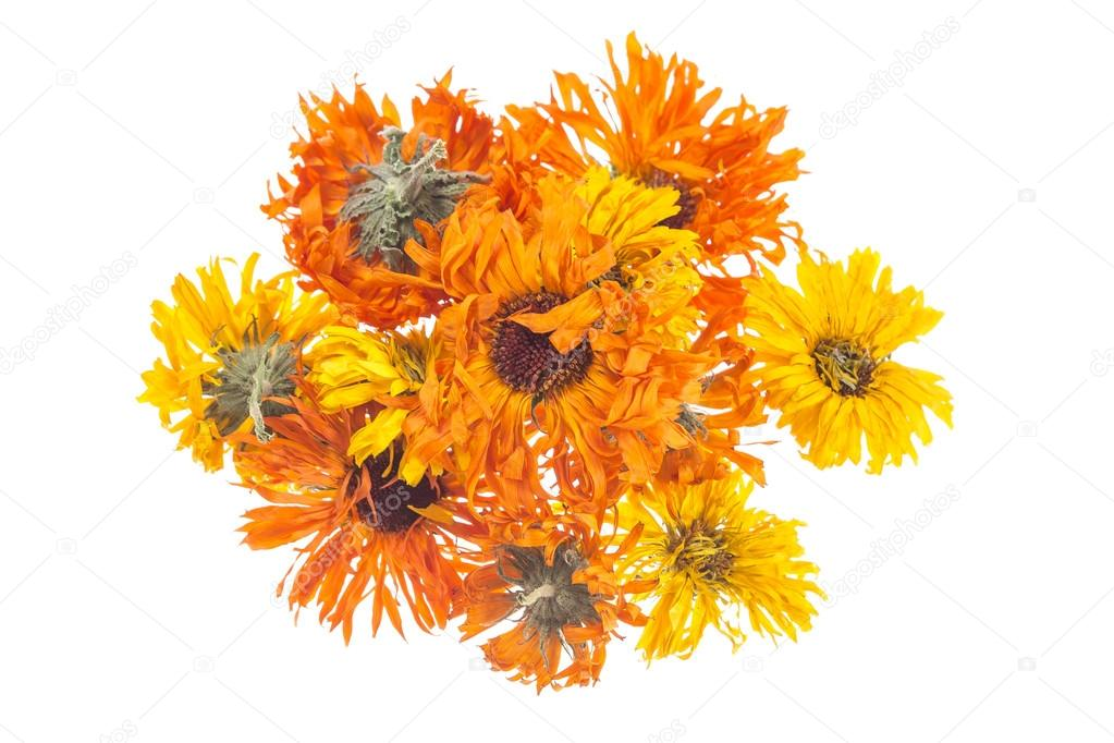 Dried calendula or marigold flowers isolated on white background.