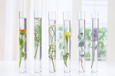 herbal medicine researchPants in test tubes