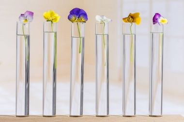 Nice pansies,essential oil in glass test tubes stock vector