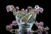 Fotografie Flowering oregano Origanum vulgare in glass mortar - isolated in front of black