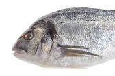 Dorado fish or sea seabream isolated profile view on white