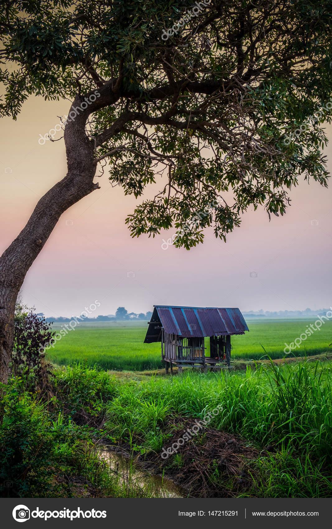 Campo y la niebla y la casita, el árbol se enmarca — Foto de stock ...