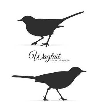 Vector illustration: Silhouette of Wagtail