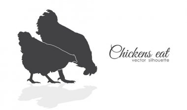 Isolated silhouette of Chickens peck feed on white background.