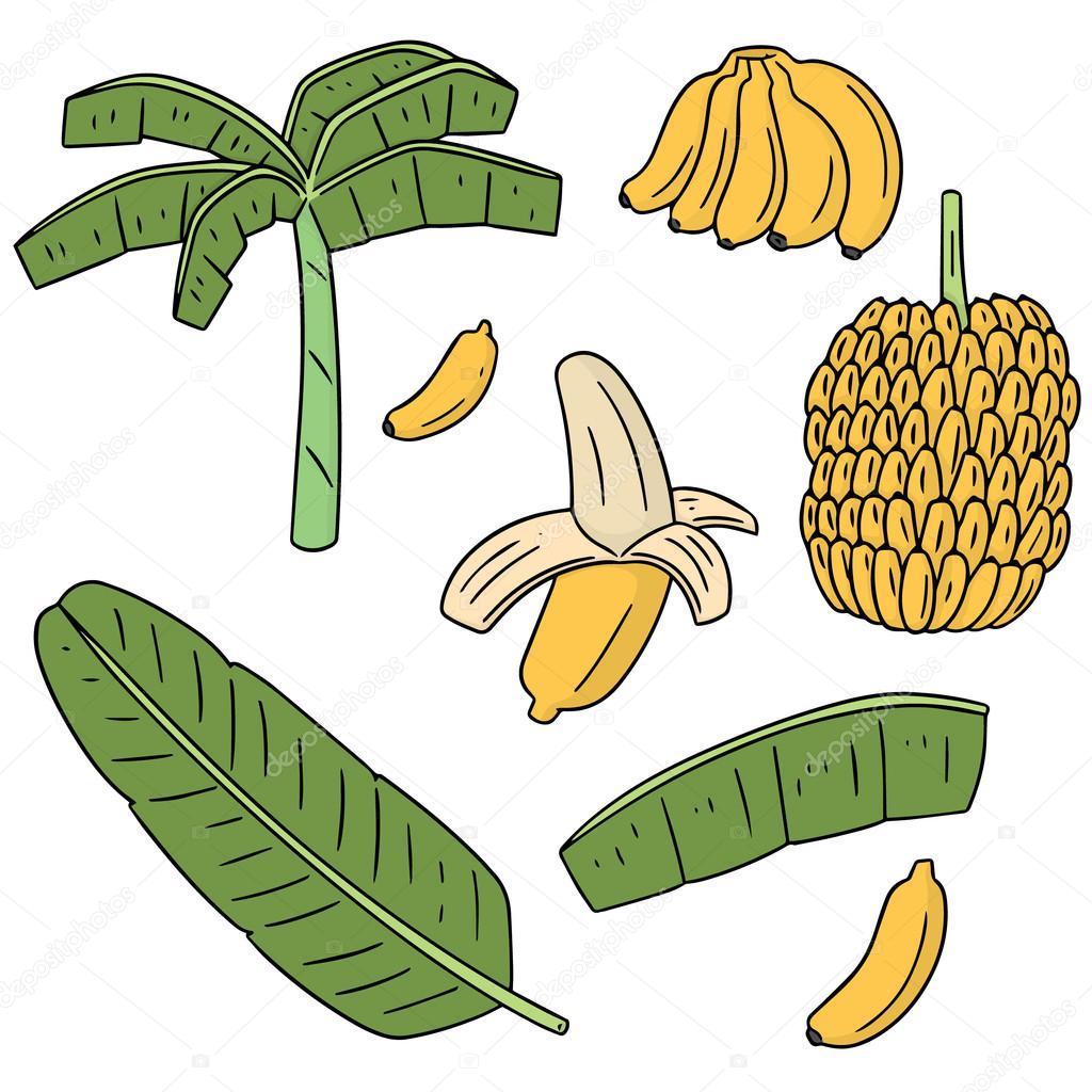 vector set of banana tree