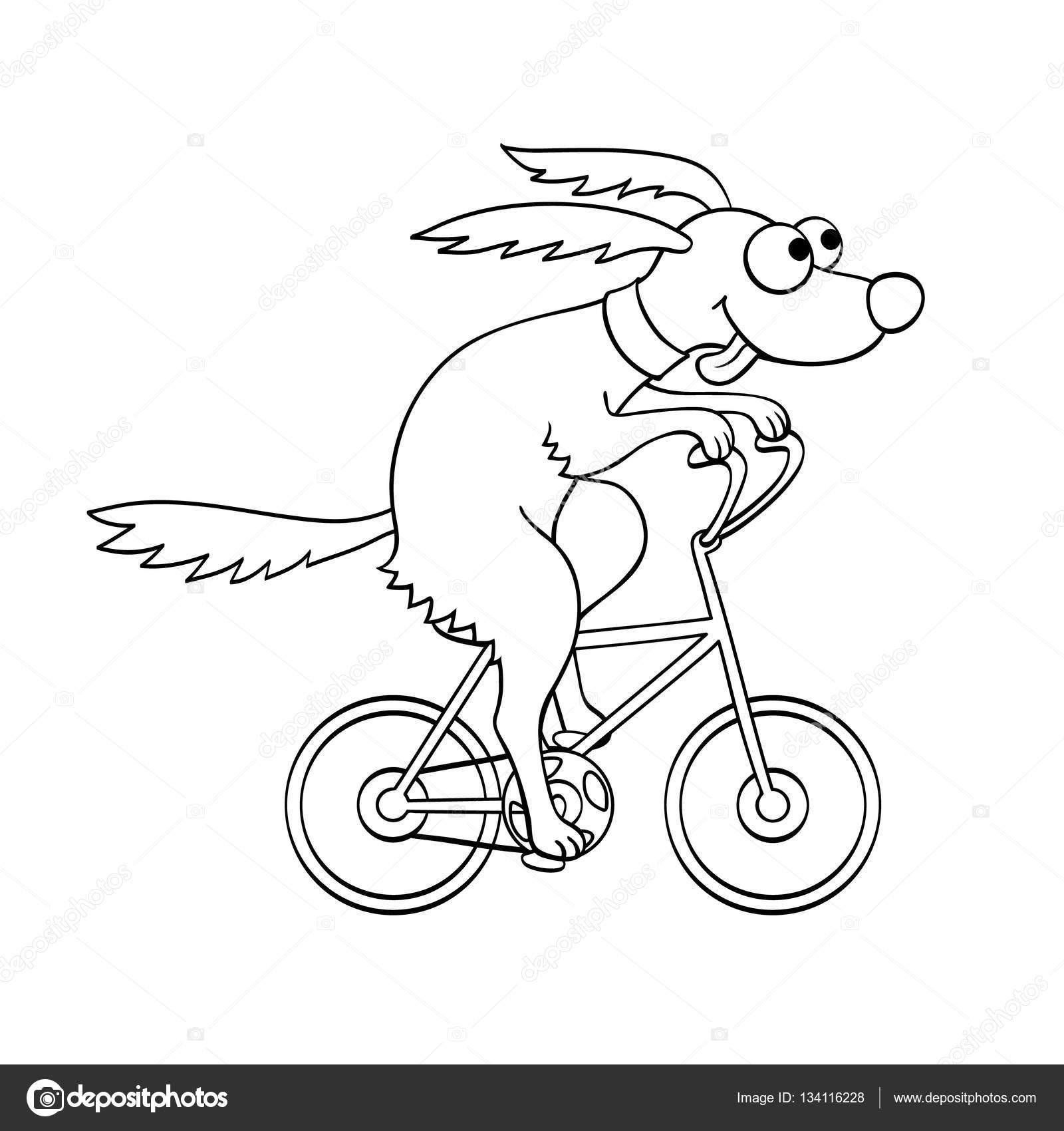 Lindo perro, andar en bicicleta — Archivo Imágenes ... Andar En Bicicleta Para Colorear