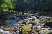 fiume nel mezzo della foresta