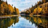 podzimní příroda Les