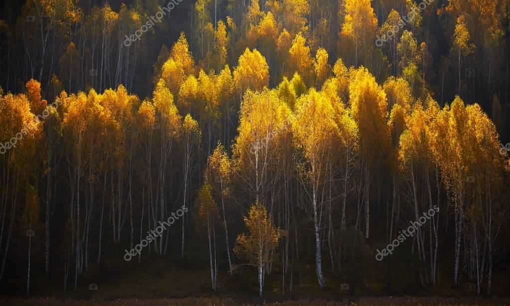 Autumn nature forest