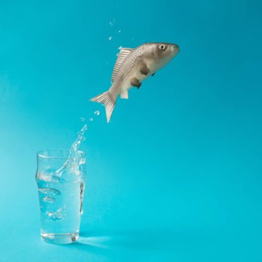 Fish jumping out of glass of water