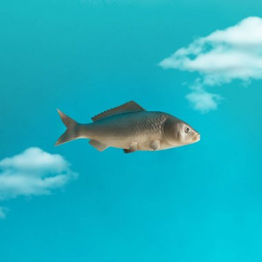 Fish in sky with clouds
