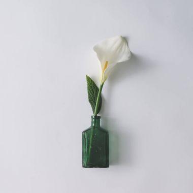 White calla flower in glass bottle