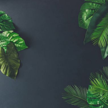 Creative layout made of tropical leaves