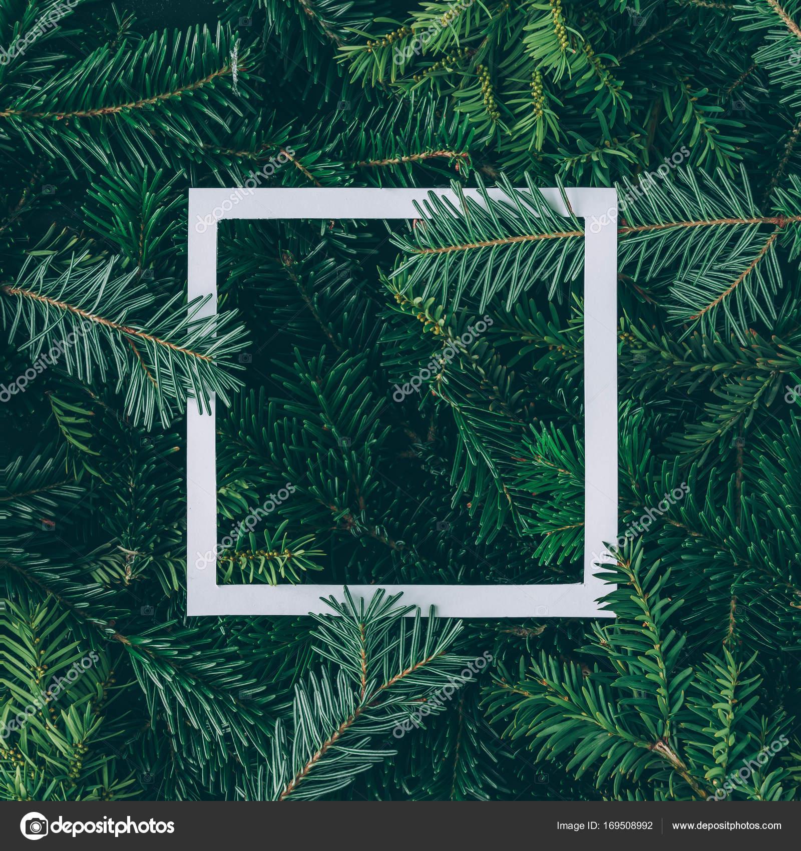ramas de los árboles con marco de papel — Foto de stock © Zamurovic ...