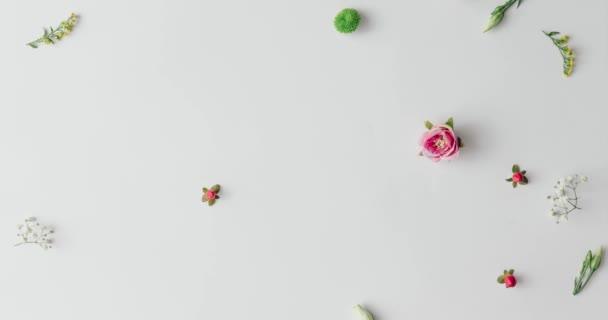 kolekce barevných jarních květin vytváří vzorek na světlé pozadí, příroda koncepce