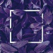 Fényképek fehér kerettel, tropic lila kreatív elrendezését hagy, természetfeletti koncepció