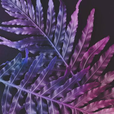 creative tropic purple leaves layout, supernatural concept
