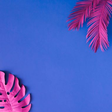 tropical and palm leaves in pink colors on blue background, Concept art, Minimal surrealism
