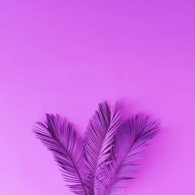 tropical and palm leaves in purple colors , Concept art, Minimal surrealism