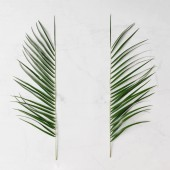 Fotografie creative tropical leaves isolated on white background, minimal summer concept