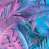 Fényképek Trópusi és palm levelek élénk merész színátmenet holografikus neon színek. Concept art. Minimális szürrealizmus háttér.