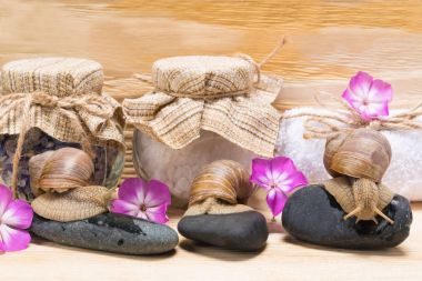 snails on rocks, against the background of salt for a spa in jars