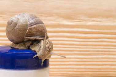 Snail Slime Cream for Skin and Spa Procedures, close-up