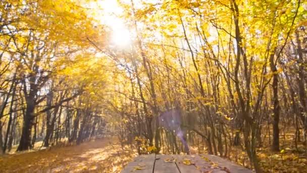 Podzimní listí padá v lese na prázdný stůl dřevěný. Prostor pro vaše montage