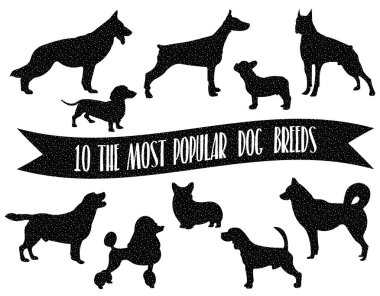 Dog breeds set. Dogs icons. Dog breeds silhouette. The most popular dog breeds with carton/space effect.
