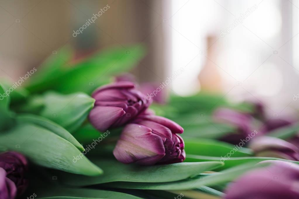 flower purple tulips