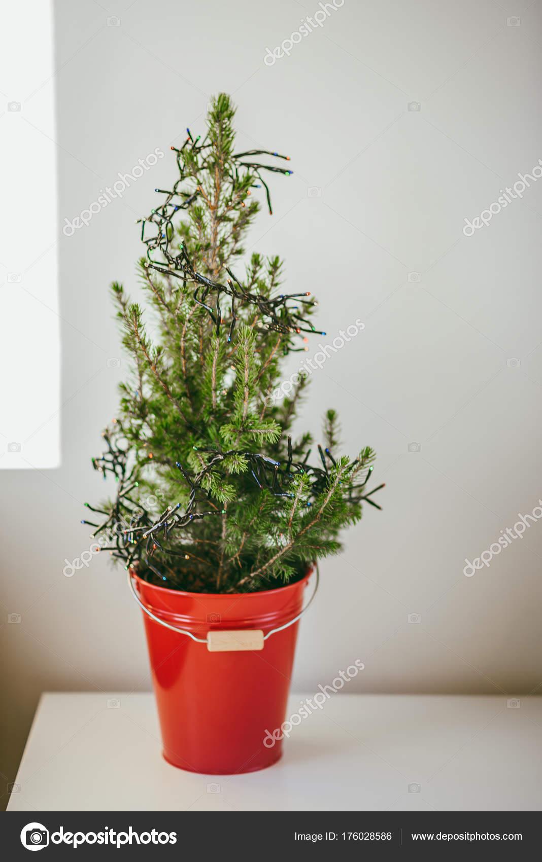 Little Christmas Tree Red Bucket White Table Stock Photo C Afotoeu