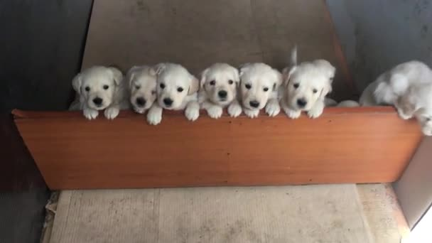 Top view of puppies standing in row
