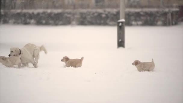 Kleine Mädchen mit Jungen spielen im Winter mit Golden Retriever Hunden im Freien