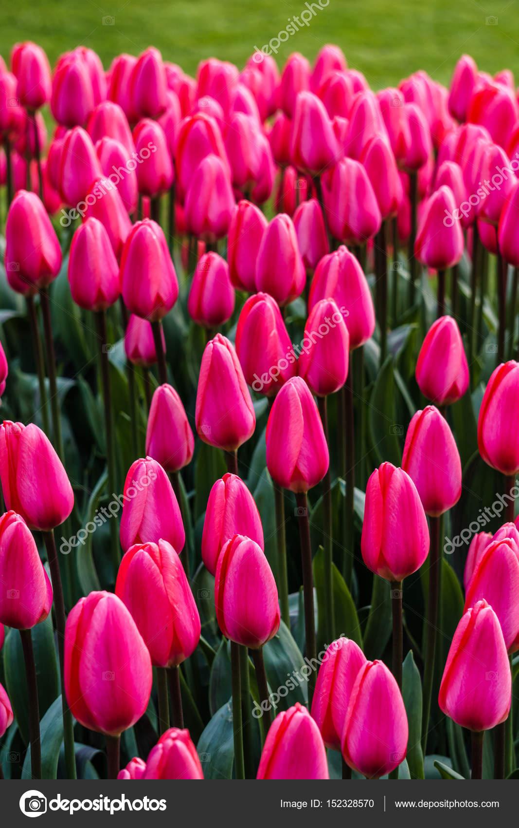 Hintergrund mit schönen wilden Blumen draußen im Park am spring ...