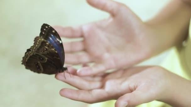 Dívka držela motýla v náručí 4k