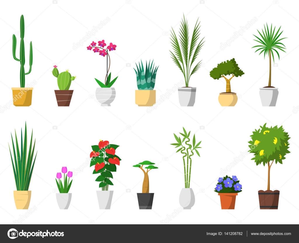Gran conjunto de plantas decorativas para el hogar con el for Plantas decorativas hidroponicas