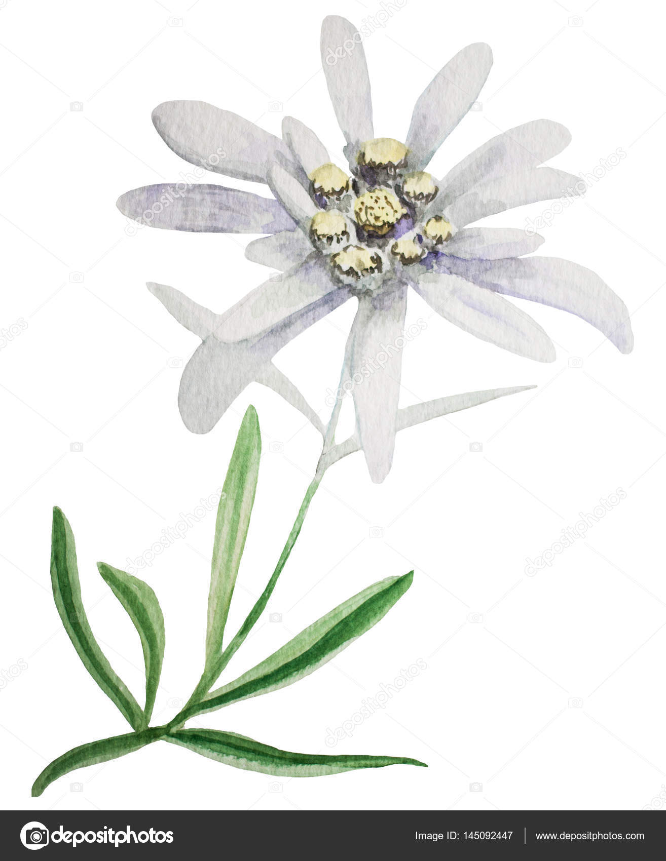 Edelweiss Color Decoration