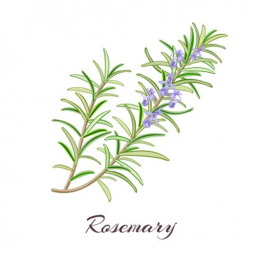 Rosemary herb. Rosmarinus officinalis.