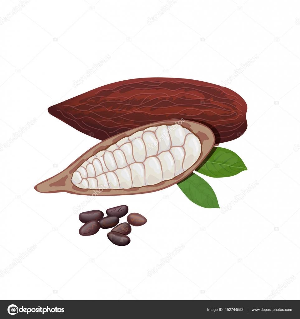 Frische reife Kakao-Früchte. Kakao-Pod Blätter und Bohnen ...