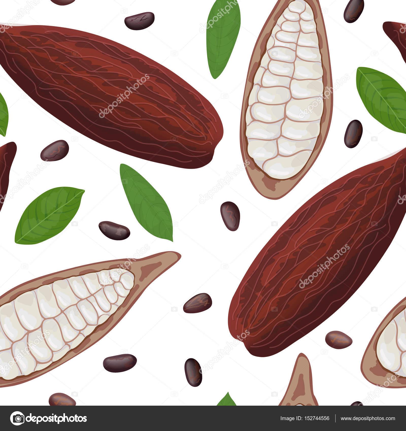 Frische reife Kakao Obst Musterdesign Vektor. Kakao-Pod Blätter und ...